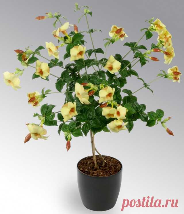 Алфавитный список растений от А до Я - Комнатные растения ...
