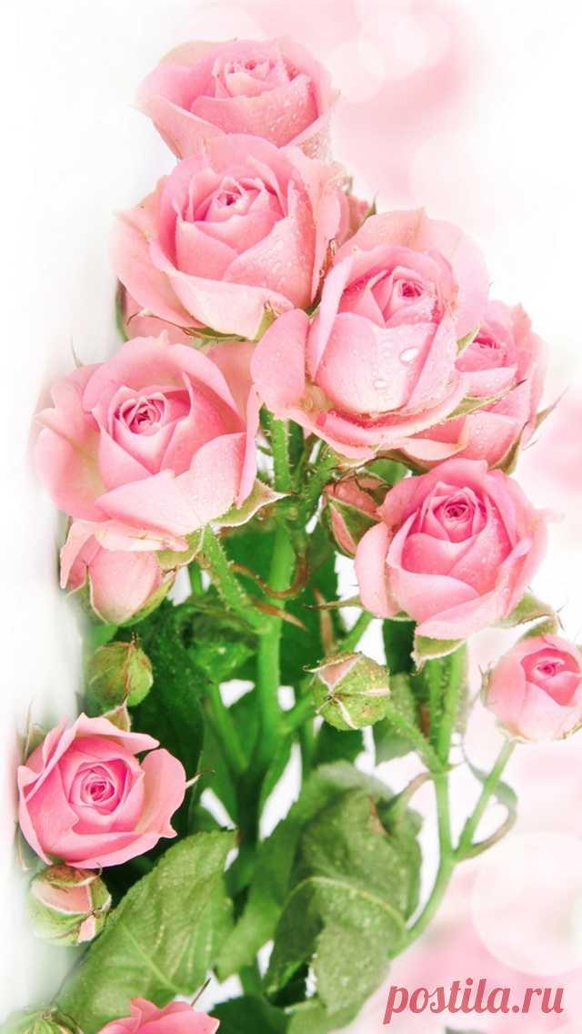 Открытки цветы вертикальные, молитвой
