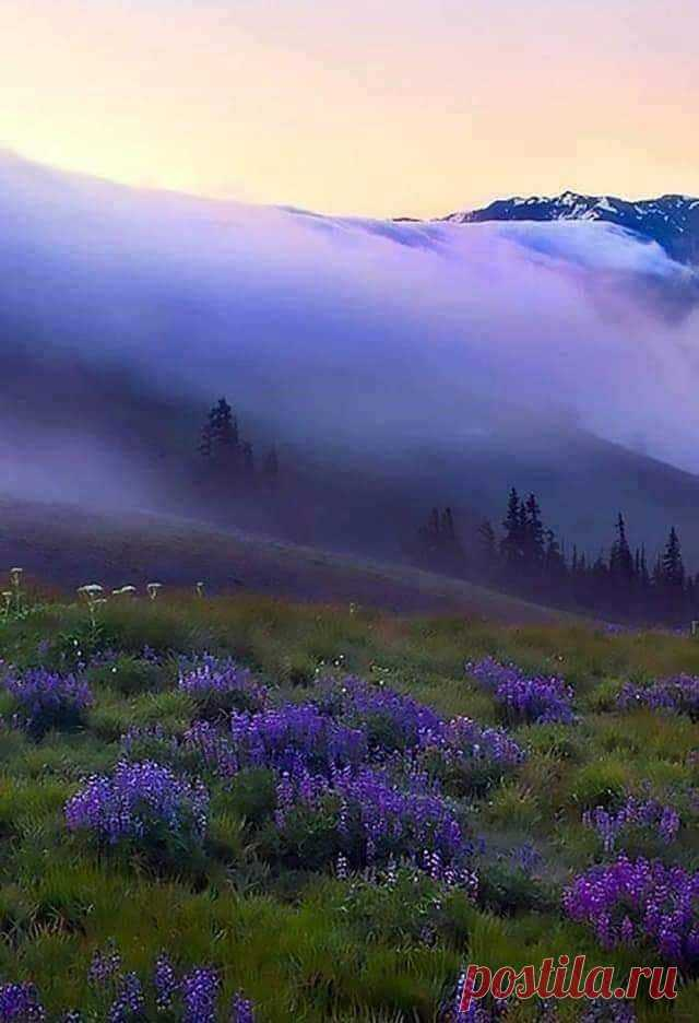 Сиреневый туман. ❤️🙏👏💖✨ Карпаты. Украина