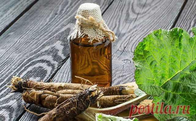 От чего помогает, как приготовить и принимать лопух с мёдом