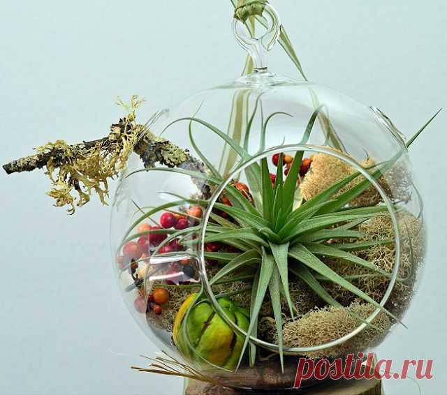 Создаем свой флорариум - подробное описание | РОЗЫ