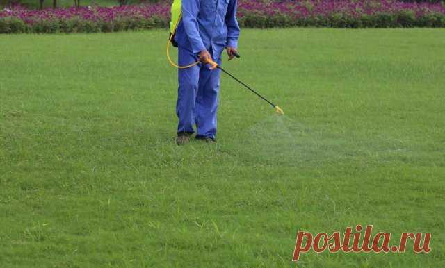 7 способов избавиться от мха на газоне | Газон (Огород.ru)