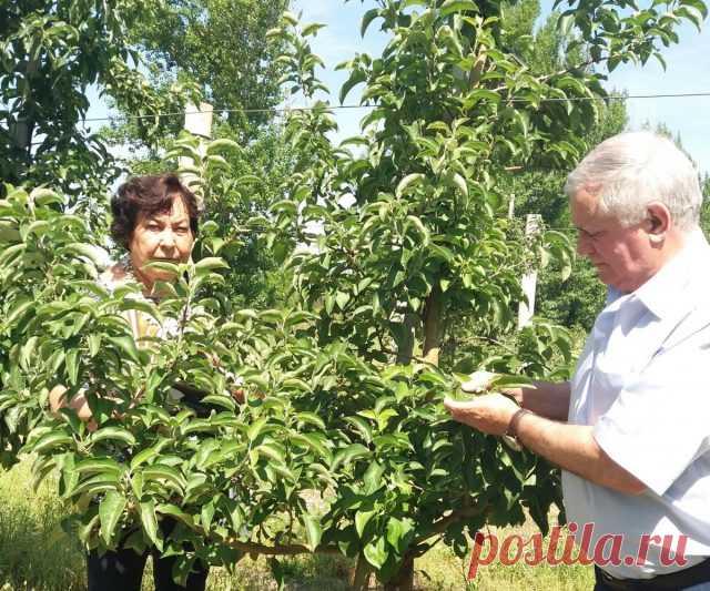 Как подкармливать растения — Ботаничка.ru