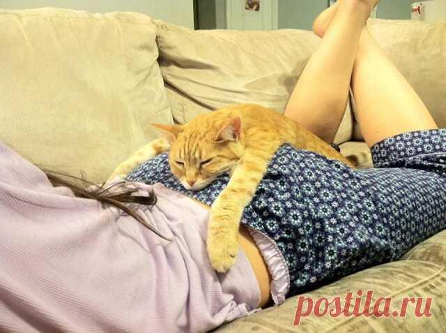 Во сне, кот переходит в жидкое состояние