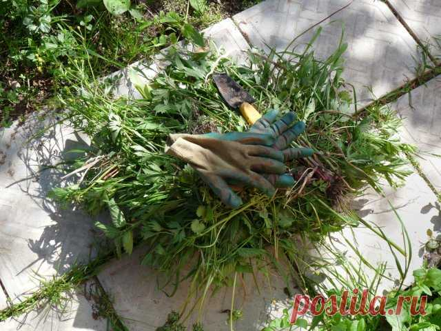 10 способов борьбы с сорняками на дорожках