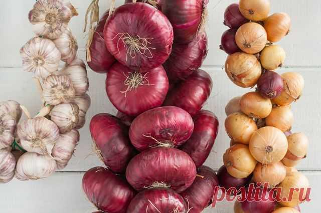 Внимание на температуру и влажность. Как хранить урожай лука и чеснока? Вырастить много овощей – полдела, другая половина заключена в грамотном хранении, чтобы ни одна головка лука или чеснока не пропала даром.