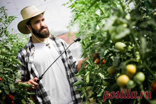Чем нужно опрыскивать томаты в июне и июле, чтобы сберечь и повысить урожай