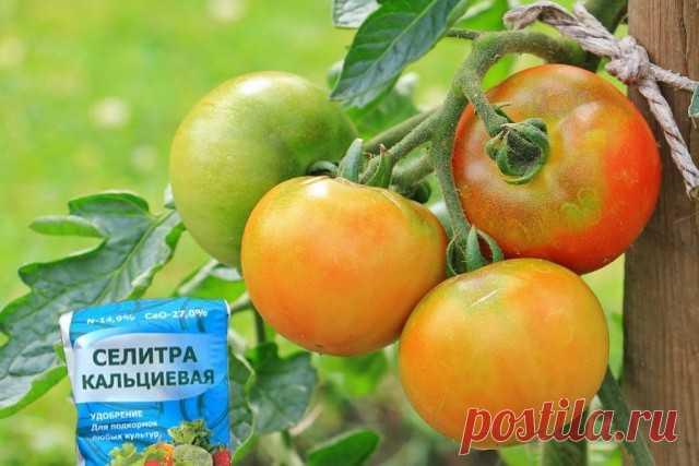 Зачем нужна кальциевая селитра? — Ботаничка.ru
