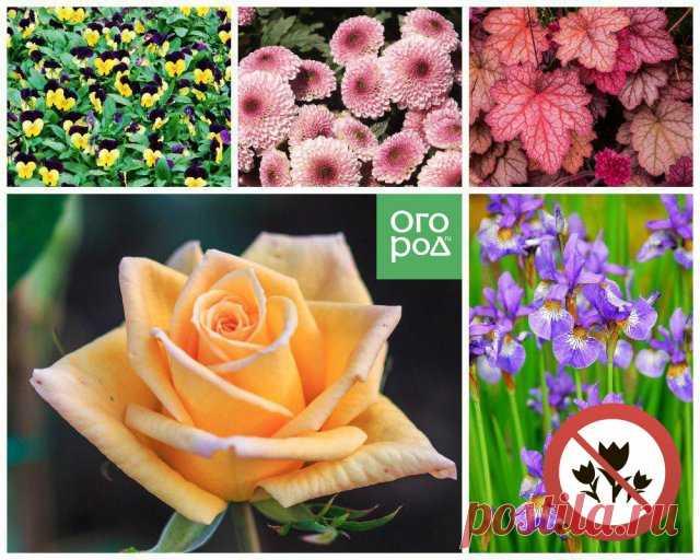 Какие цветы нельзя сажать рядом – 10 самых неудачных сочетаний   Цветники и клумбы (Огород.ru)