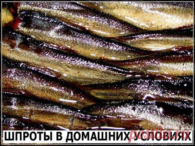 Скажу сразу, по вкусу получается ну ни капли не отличимо от магазинных шпрот. 1 кг рыбы (килька, мойва). Для заливки на 1 кг рыбы: 2 горсти луковой шелухи (она дает и цвет и подкопченый вкус. И заметьте, без всякого копчения, жидкого дыма и канцерогенов!), 1 столовая ложка соли, 1 чайная сахара, 1 стакан очень крепкой чайной заварки, неполный стакан растительного масла, 7 лавровых листьев, несколько горошин черного перца. Рыбку необходимо почистить и промыть, убрать хвосто...
