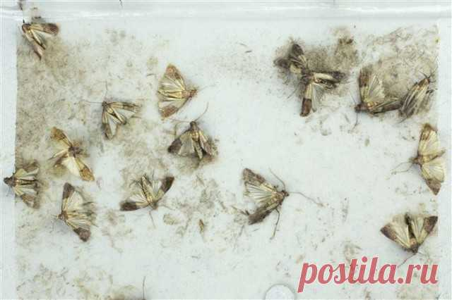 How effectively to get rid of a moth in the apartment — Useful tips