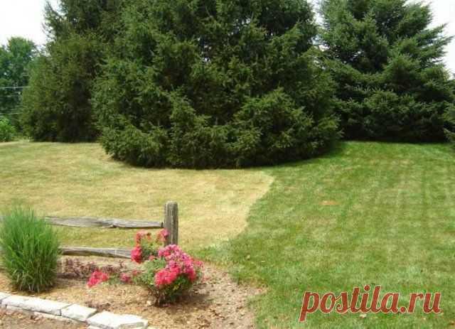 5 ошибок в уходе, которые губят ваш газон | Газон (Огород.ru)