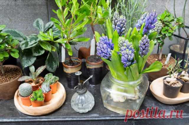 Зимний сад в квартире. Какие комнатные растения выбрать Многие из нас выращивают комнатные цветы. Но ведь можно вместо хаотично наставленных горшков устроить нечто вроде домашнего садика. Как обустроить зимний сад в небольшой квартире?