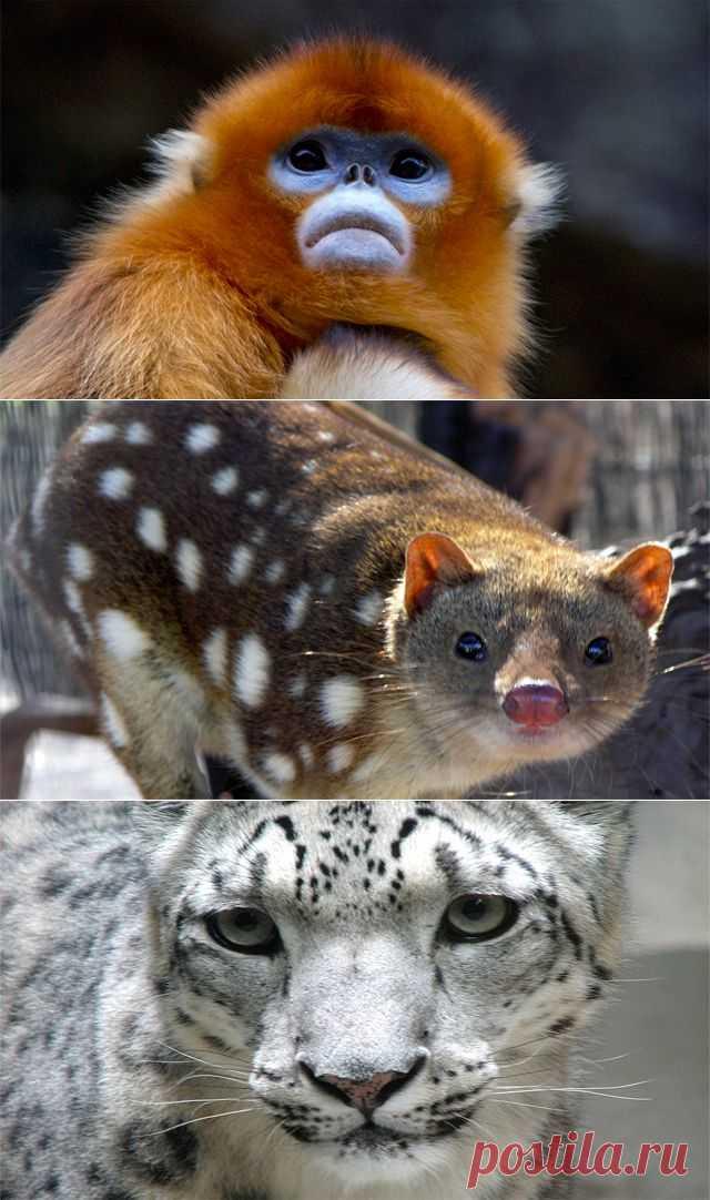 Самые редкие животные — Природа — Релакс!