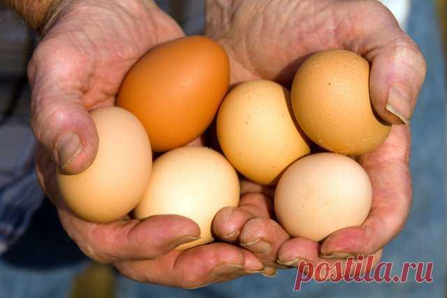 Чем кормить кур, чтобы они лучше неслись | Подворье (Огород.ru)
