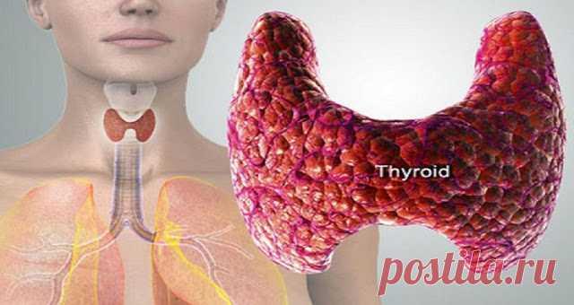 14 тревожных симптомов неисправности щитовидной железы и способы ее исцеления и предотвращения - Советы для женщин