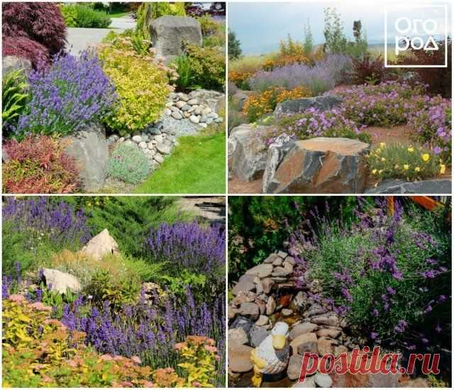 10 ideas how to use a lavender in design of a garden | Ideas of design (Огород.ru)