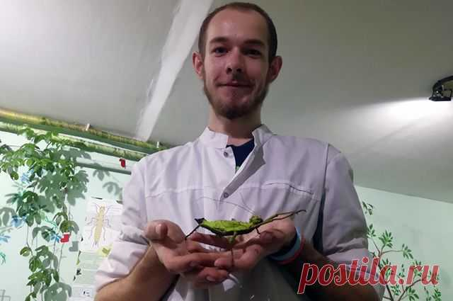 Более 60 видов насекомых. Воронежский биолог открыл самодельный инсектарий «АиФ-Воронеж» поговорил с биологом Сергеем Быковским, который открыл собственный инсектарий.