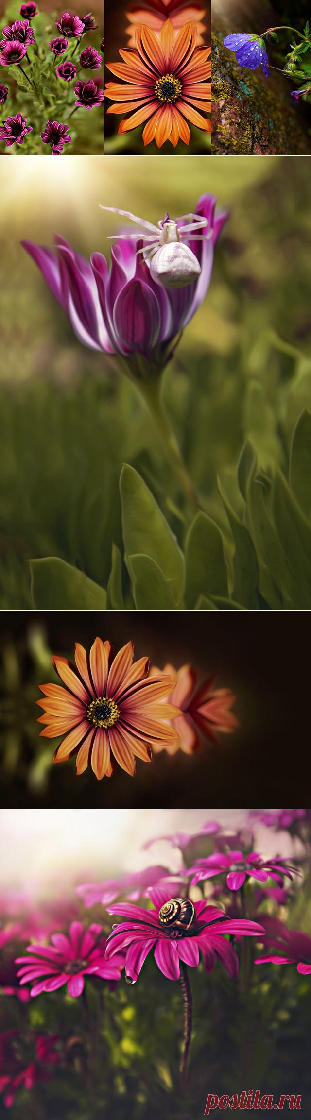 Красота цветов в макрофотографии. Красивые фотографии цветов.   Newpix.ru - позитивный интернет-журнал