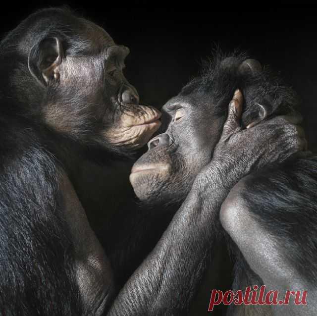 Фотограф Тим Флеч (Tim Flach) и его фотографии животных