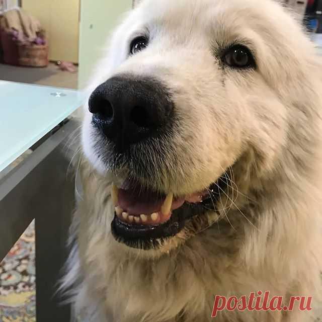 Photo by Татьяна Образцова on May 27, 2020. На изображении может находиться: собака.