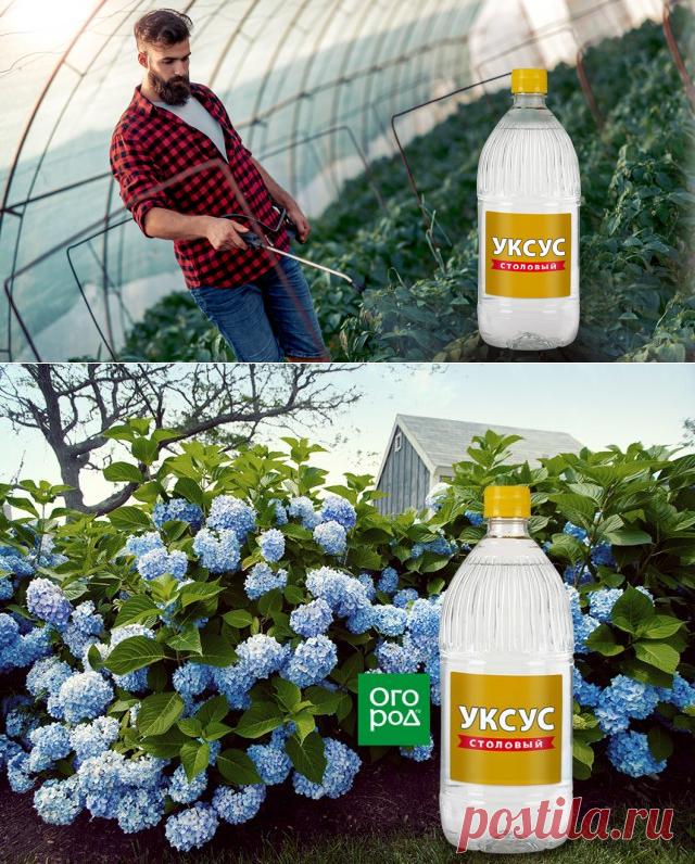 11 необычных способов применения уксуса на даче | Дела огородные (Огород.ru)