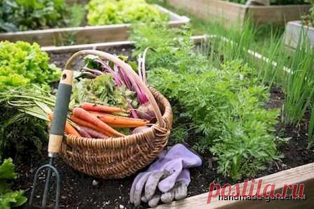 10 секретов правильного расположении грядок в огороде