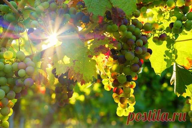 Сезонные работы в саду в августе • Ух!Дача и 100 советов в придачу