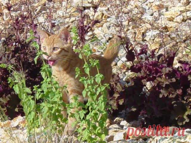 Смешная реакция котов на прогулку за пределами дома