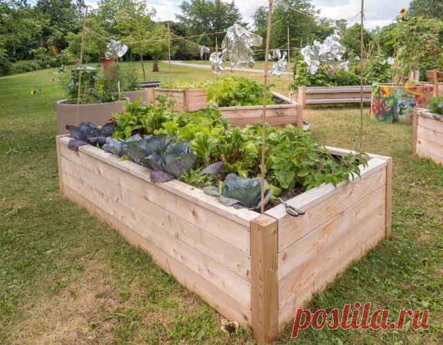 10 правил выращивания на высоких грядках