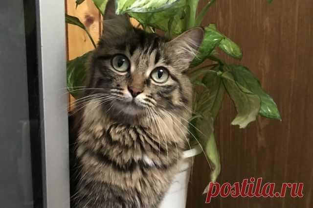 В РФ стартовали доклинические исследования вакцины от аллергии на кошек Как заявили в Сеченовском университете, исследование будет проведено достаточно быстро.
