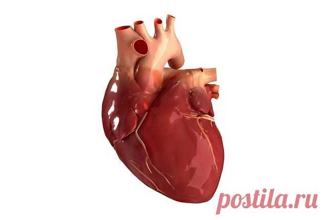 ВАЖНО! Это касается каждого!     Инфаркт, инсульт, тромбофлебит, варикозное расширение вен, геморрой… Что общего у всех этих заболеваний? Одна из причин их возникновения — густая кровь. Она не может свободно продвигаться по кровеносным сосудам (особенно по сосудам мозга) и транспортировать питательные вещества и кислород. Замедленный кровоток также приводит к кислородному голоданию внутренних органов.  Некоторые знают, что густую кровь надо разжижать. Но многие и не догады...