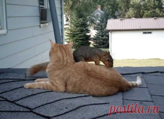 гифка про кота и белку правильно воздействовать своих