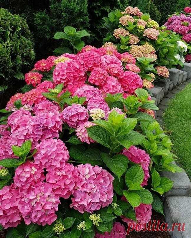 Очень красивый сад