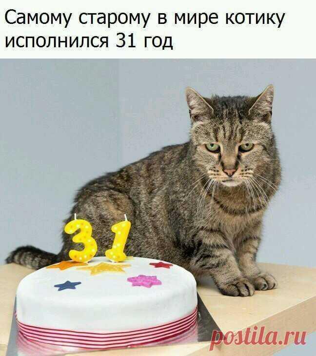 Самый старый котик