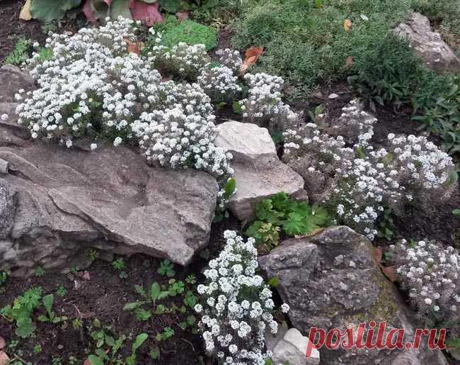 цветы в саду и огороде дизайн своими руками 2