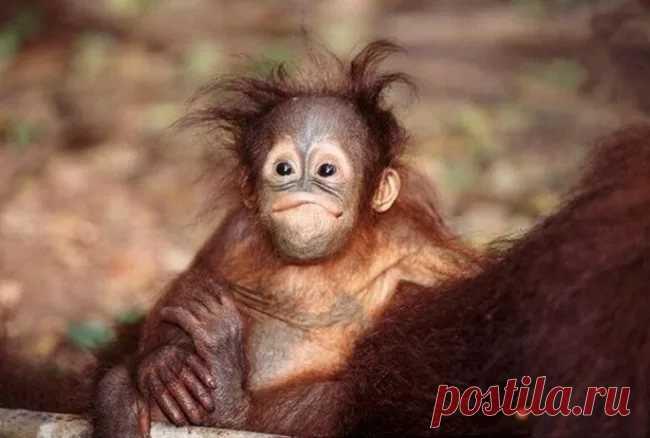 Открытки с обезьянками доброе утро