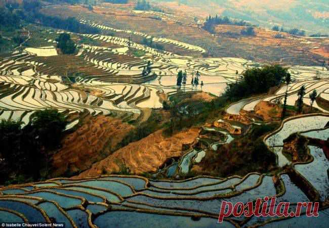 Rice terraces of the Province of Yunnan, China.\u000d\u000a\u000d\u000aThe sunlight is reflected in a water smooth surface of the flooded rice fields in high-rise terraces of the Province of Yunnan, China. The long, seeming glass reservoirs stretched for the line of the horizon in mountainous areas of the province. The population Yunnanya in the majority belongs to an ethnic group of Hani which grows up rice on terraces during the last 1300.\u000d\u000aTerraces are at the height from 1000 to 2000 meters above sea level. Rice is landed once a year in...