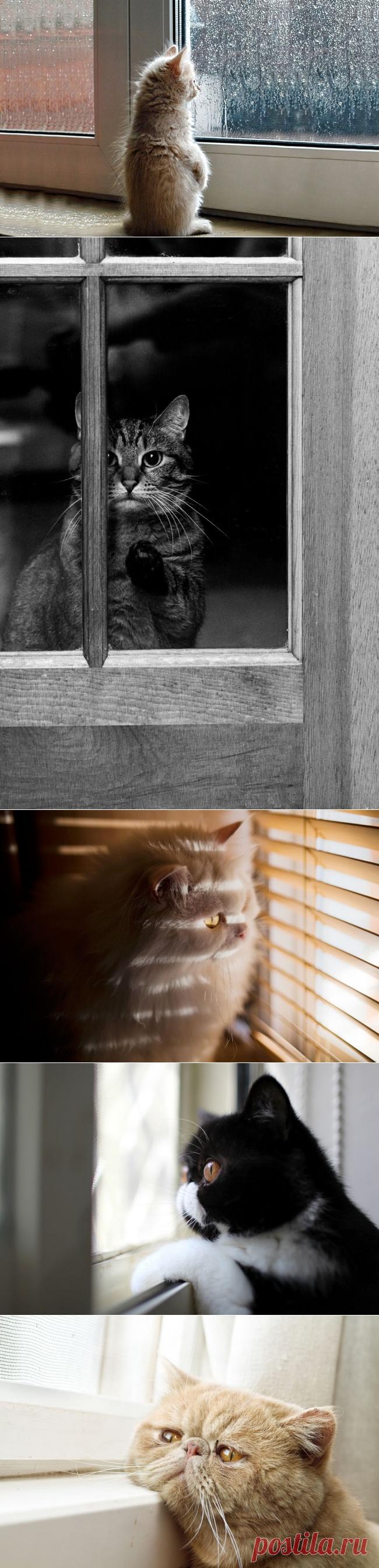 Principal que alguien espere la casa
