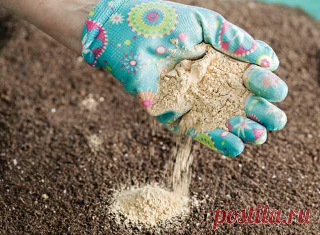 Чем раскислить почву осенью? | 6 соток