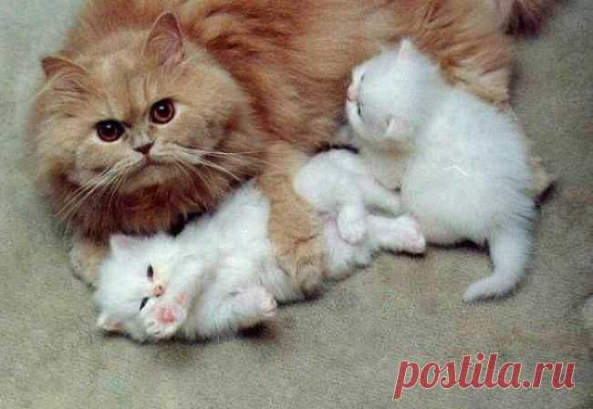 Мама, почему говорят, что мы тебе не родные....