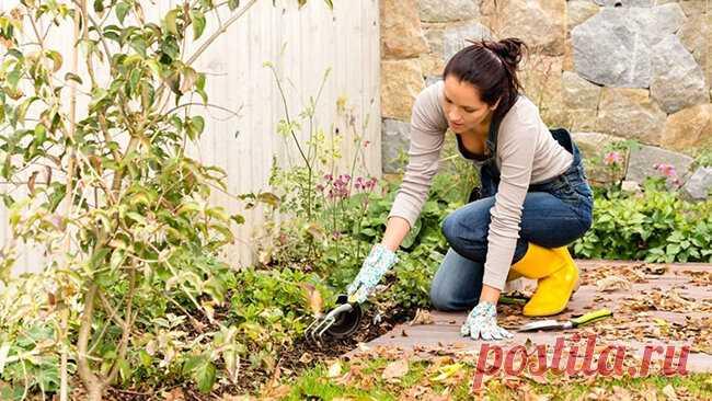 Осенние работы на даче: как правильно подготовить сад и огород к зиме. | Сад и Огород | Яндекс Дзен