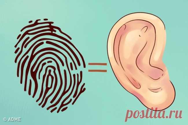 Conozcan que sus orejas hablan sobre usted