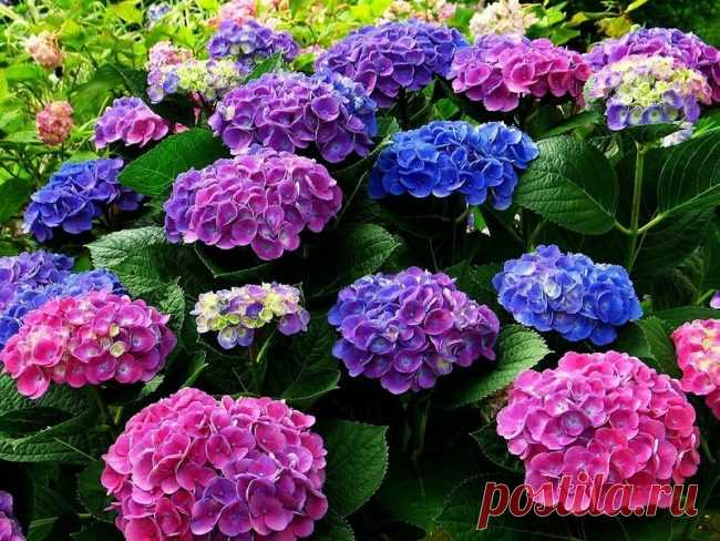 Than to feed up a hydrangea in the summer