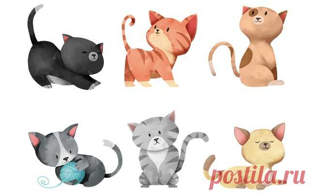 Test for determination of character: Choose a cat who is more similar to you