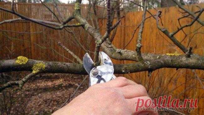 Cutting of fruit-trees: appointment, terms and ways