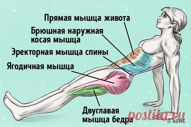 Всего одно упражнение, чтобы сжечь жир и исправить осанку - Домашние Советы