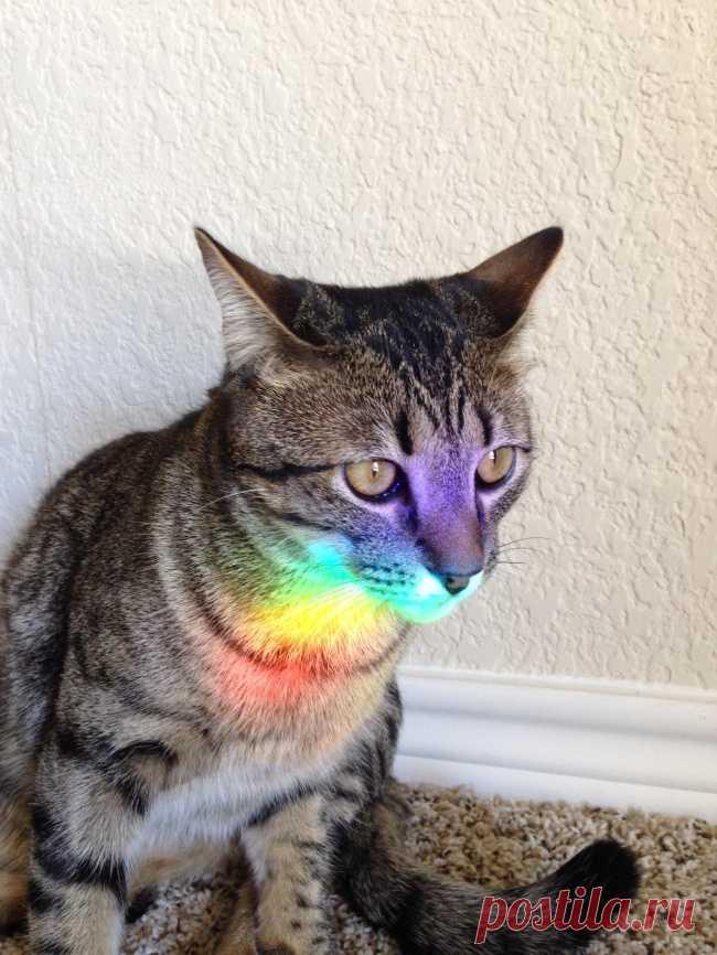 Пожалуй, самое удачное расположение котика в пространстве