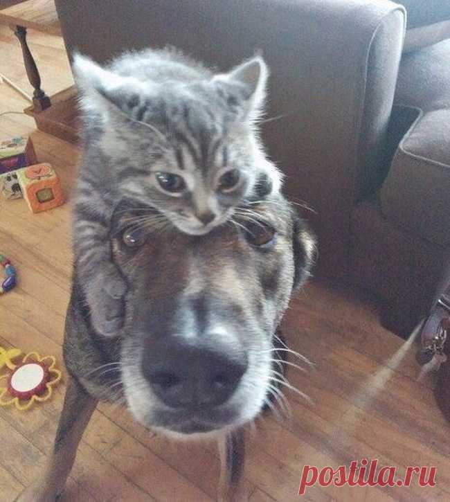 Прикольные коты и собаки картинки