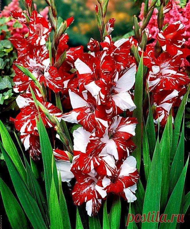 редкие садовые цветы фото и названия стиле шале